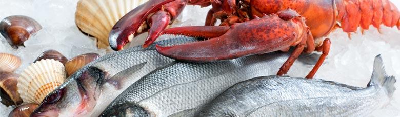 1- L'ús del gel en el tractament del peix fresc.